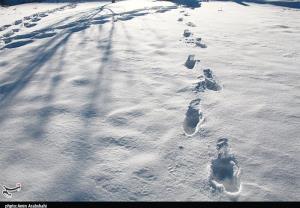 کولاک برف در راه استان البرز؛ دمای هوا تا ۱۰ درجه کاهش مییابد