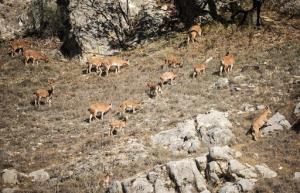 مهاجرت حیوانات از حیات وحش پارک ملی ساریگل
