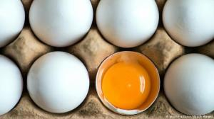عرضه تخم مرغ بسته بندی به انجمن واگذار شد
