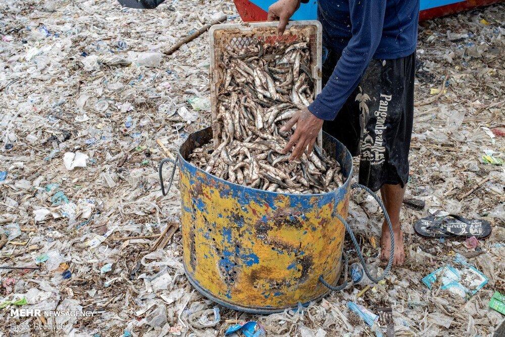 ماهیگیری در میان انبوه زباله در ساحل منطقه توریستی بالی