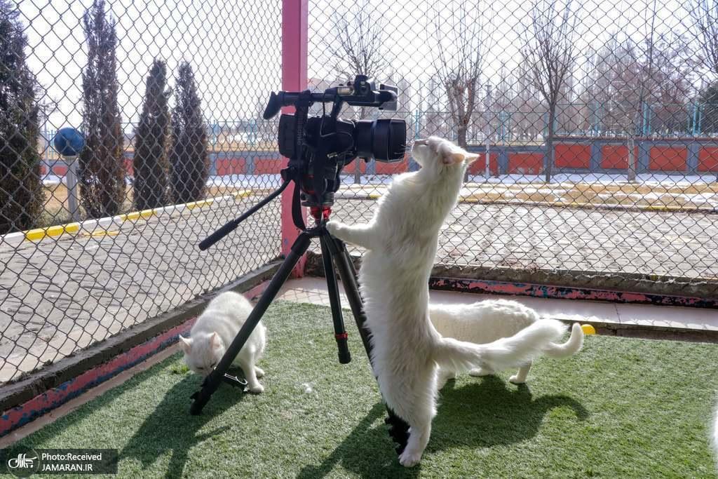 کنجکاوی گربه های سفید