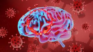 کروناویروس داخل نورون ها به بافت مغز آسیب می رساند
