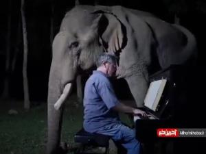 پیانو نوازی دیدنی برای یک فیل و عکس العمل آن