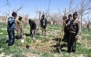 خراسان شمالی در شاخص بیمهشدگان فعال صندوق اجتماعی پنجم کشور است