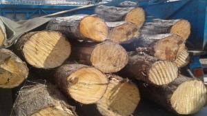 کشف ۱۱ تن چوب قاچاق در ماسال