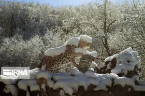 چهره زیبای برفی در مناطق شمالی کشور