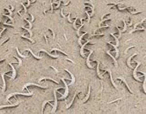 کتاب «دگرگونی های بزرگ»؛ رمزگشایی چهارمیلیارد سال حیات از فسیل های باستانی