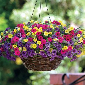 10 گل بهاری که باید در زمستان کاشته شوند