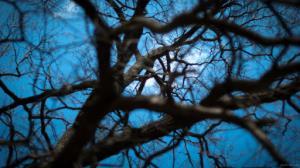 استقامت جالب شاخه درخت هنگام بازی بچه ها