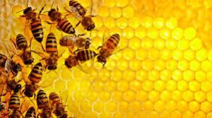 نمونه مصنوعی مغز زنبور ساخته شد