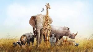 کمپ در کنار حیوانات آفریقایی!