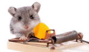 قدرت تله موش را ببینید