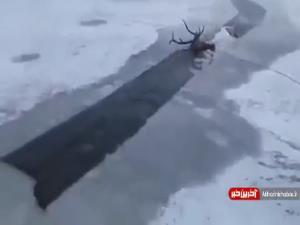 نجات یک حیوان از یخ زدگی