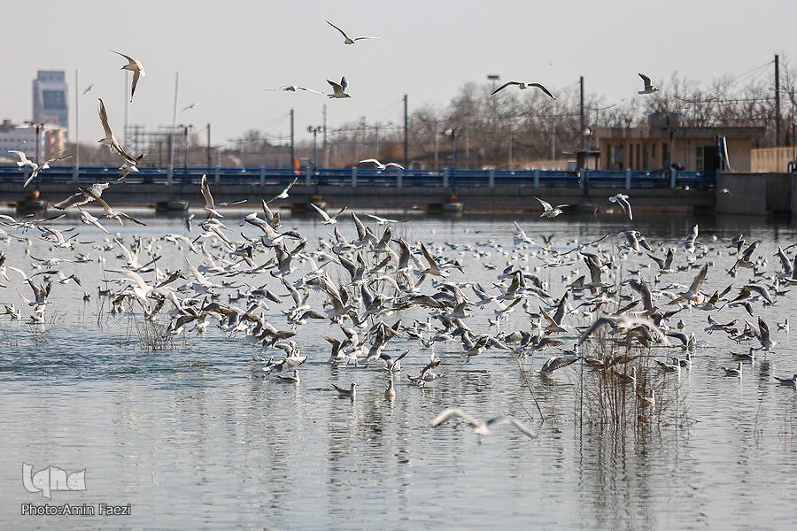 پرندگان مهاجر میزبان رودخانه خشک شیراز