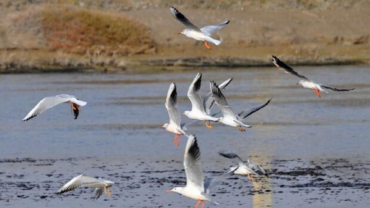 هنوز خبری از آنفلوانزای پرندگان در مهاباد نیست
