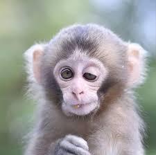 کلیپی جالب از بازیگوشی میمون ها