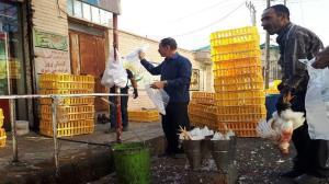 ممنوعیت خرید و فروش مرغ زنده در مهاباد
