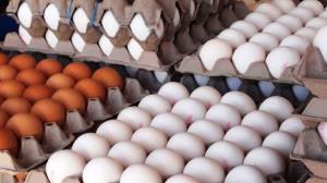 کشف یک محموله تخم مرغ احتکار شده در شهرستان مهران