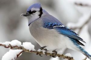 پرنده ها این شکلی از جوجه هاشون مقابل سرما محافظت میکنن