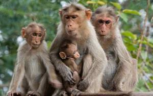 تصاویر جالب از تجمع میمون ها کنار هم برای گرم ماندن در هوای سرد