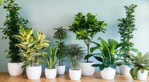 بهترین روشهای خانگی برای از بین بردن حشرات و پشه های گلدان