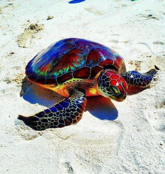 گونه ای کمیاب از لاکپشت دریایی با بدن رنگی