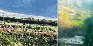 گاودزدی نظامیان رژیم صهیونیستی از لبنان