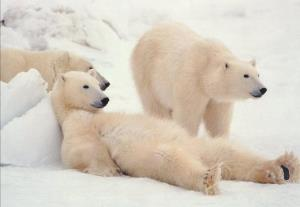 غذا دادن به خرس قطبی از پنجره خانه!