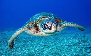 نجات یک لاکپشت دریایی از تله خرچنگ