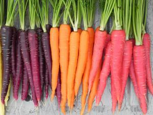 اینفوگرافی/ 12خاصیت مهم هویج برای بدن