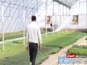 کشاورزی که با استفاده از شیوه های نوین به تولیداتش رونق بخشید