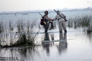 عاملان کشتار ۵۴ مرغابی وحشی در خلیج گرگان دستگیر شدند