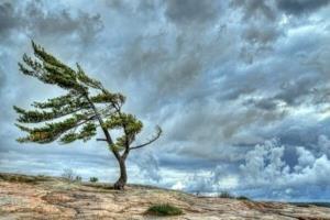 وزش باد شدید اردبیل را درمینوردد