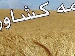 فرصت تمدید بیمه کلزا کاران تا ۱۵ بهمن