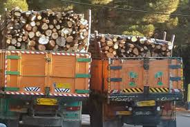 کشف ۵۰ تن چوب غیرمجاز در بندرعباس