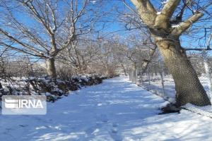 عکس/ طبیعت برفی شهرستان مرزی اشنویه