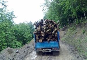 تبر تیز قاچاقچیان حرفهای بر اندام نحیف جنگلهای هیرکانی