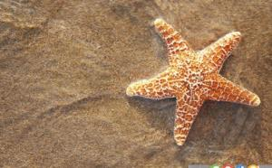 ستاره دریایی زنده