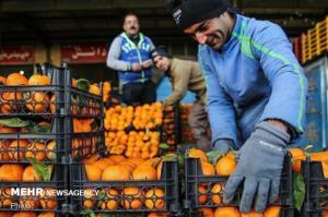 قیمت پرتقال شب عید در مازندران تعیین شد