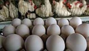وزیر جهاد کشاورزی: به خوبی توانستیم بازار مرغ و تخم مرغ را آرام کنیم