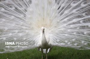 باغ پرندگان بندرعباس بازگشایی شد