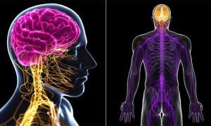 درمان پلی نوروپاتی و ارتباط آن با درمان ارتوپدی