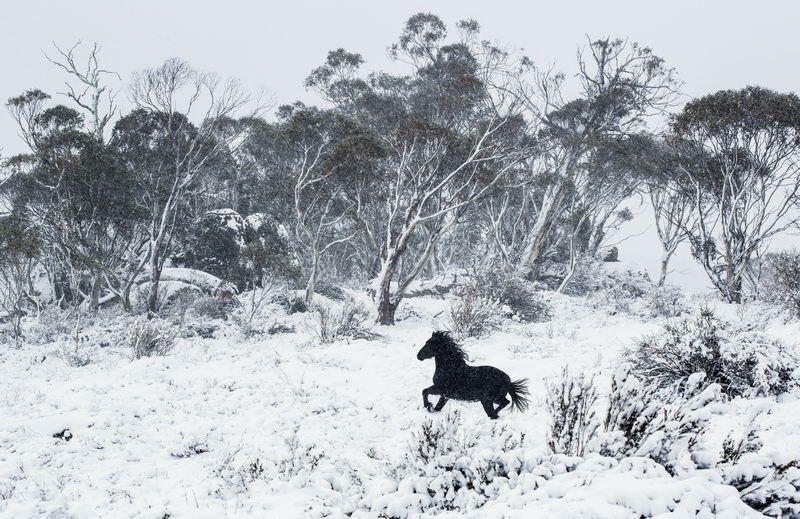 تصویری زیبا از اسب در جنگل برفی