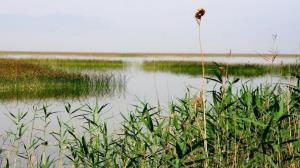 ثبت نی زار نخاب خوسف در فهرست میراث طبیعی کشور