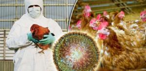 موردی از آنفلوانزای فوق حاد پرندگان در آذربایجان غربی مشاهده نشد