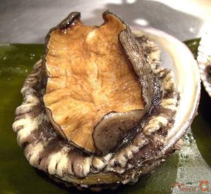 گران قیمتترین غذاهای دریایی در دنیا