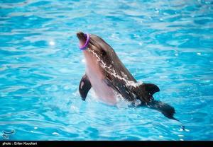عاقبت دلفین