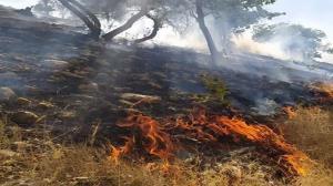 مهار کامل آتش سوزی در ارتفاعات سبز پوشان شیراز