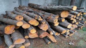 توقیف ۳ خودرو حامل چوب آلات قاچاق جنگلی در ممسنی