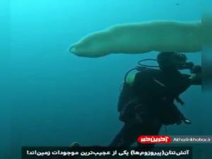 از کمیابترین موجودات دریایی